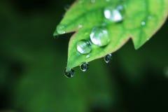 De daling van het water op bladclose-up Stock Afbeelding
