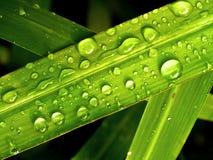 De daling van het water op bladeren 06 Stock Foto's