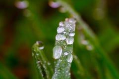 De daling van het water op Gras Royalty-vrije Stock Afbeeldingen