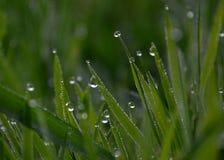 De daling van het water op gras Royalty-vrije Stock Foto's