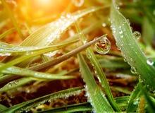 De daling van het water op groen blad Royalty-vrije Stock Foto's
