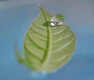 De daling van het water op groen blad Royalty-vrije Stock Fotografie