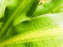 De daling van het water op groen blad Royalty-vrije Stock Foto
