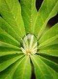 De daling van het water op het groene blad Royalty-vrije Stock Foto's