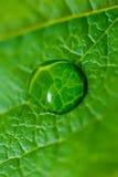 De daling van het water op het groene blad Stock Afbeelding