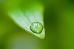 De daling van het water op het groene gras stock foto's