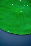 De daling van het water op lotusbloemblad Stock Afbeelding