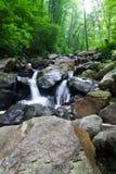 De daling van het water van het bos Stock Fotografie