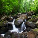 De daling van het water van het bos van Dalingen Amicalola Stock Afbeeldingen