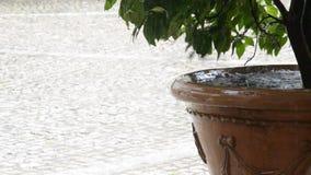De daling van regendalingen op installaties in potten stock video