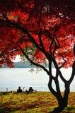 De daling van Stanley Park, Vancouver. Royalty-vrije Stock Fotografie