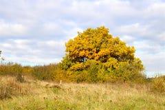 De daling wordt gezien op de boom Stock Foto