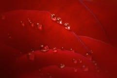 De dalingen op een rood namen bloemblaadjes toe Stock Afbeeldingen