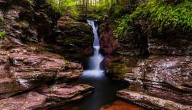 De Dalingen van Adam, in een kleine kloof in Ricketts Glen State Park worden geplooid dat Stock Foto's