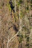 De Dalingen van de Betseysrots, Noord-Carolina, de V.S. Royalty-vrije Stock Afbeeldingen