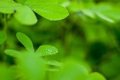 De dalingen van de dauw op groene bladeren stock afbeelding