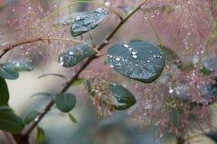 De dalingen van de dauw op bladeren Royalty-vrije Stock Afbeelding