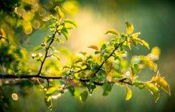 De dalingen van de dauw op groene bladeren Royalty-vrije Stock Afbeeldingen
