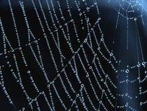 De dalingen van de dauw op spiderweb Stock Fotografie