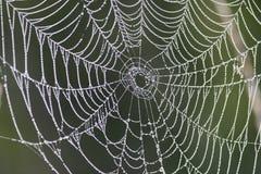 De Dalingen van de dauw op Spiderweb Royalty-vrije Stock Foto's