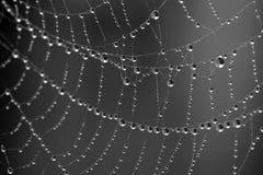 De Dalingen van de dauw op Spinneweb Stock Afbeelding