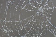 De Dalingen van de dauw op Spinneweb Stock Foto's