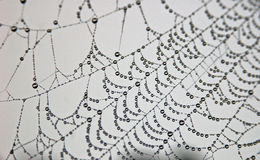De Dalingen van de dauw op Web Royalty-vrije Stock Afbeelding