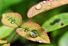 De Dalingen van de regen Royalty-vrije Stock Foto