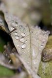 De dalingen van de regen op bladeren Royalty-vrije Stock Fotografie