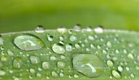 De dalingen van de regen op bladeren Stock Fotografie