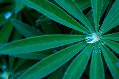De dalingen van de regen op de bladeren royalty-vrije stock afbeelding