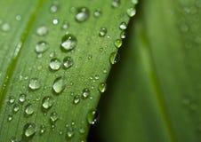 De dalingen van de regen op een blad. Stock Foto's