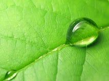 De dalingen van de regen op een groen blad Stock Afbeeldingen