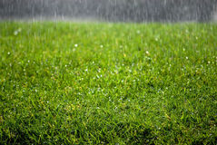 De Dalingen van de regen op Gras Royalty-vrije Stock Foto