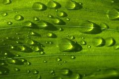 De dalingen van de regen op groen gras stock afbeelding