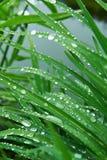 De dalingen van de regen op het gras Royalty-vrije Stock Afbeeldingen