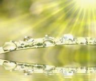 De dalingen van de regen op vers gras in het licht van de zon Stock Afbeelding