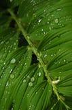 De dalingen van de regen over de bladeren Stock Afbeelding