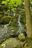 De Dalingen van de Tak van de klip, Grote Rokerige Mtns NP Royalty-vrije Stock Afbeelding