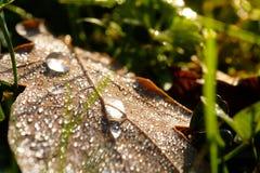 De dalingen van het dauwwater op een blad in ochtendlicht van een weide Stock Afbeeldingen