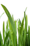 De dalingen van het gras en van de dauw Royalty-vrije Stock Foto