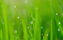 De dalingen van het gras en van het water Stock Afbeeldingen