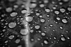 De dalingen van het water op blad royalty-vrije stock afbeelding