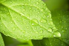 De dalingen van het water op blad. royalty-vrije stock foto