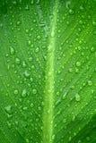 De dalingen van het water op blad stock foto
