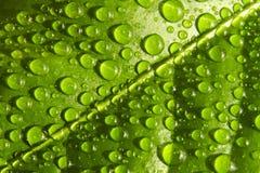 De dalingen van het water op blad royalty-vrije stock foto