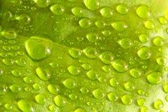 De dalingen van het water op blad royalty-vrije stock fotografie