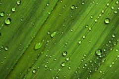 De dalingen van het water op bladeren Stock Afbeelding