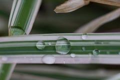 De dalingen van het water op bladeren Stock Afbeeldingen