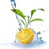 De dalingen van het water op citroen met groene bladeren Royalty-vrije Stock Foto